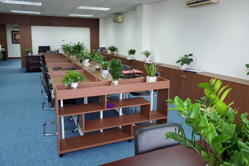 Sử dụng cây xanh để phân chia không gian là cách thiết kế văn phòng xanh chuyên nghiệp và sáng tạo